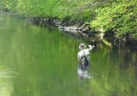 sortie pêche mouche maronne