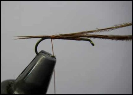 Mouche olive type germain 1